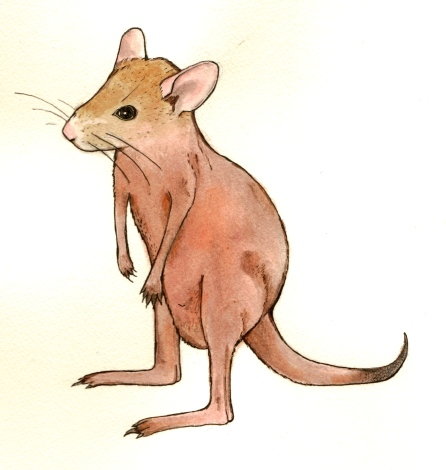 Kangaroo Mouse, Ink and gouache on paper, 2013
